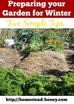 Prepare your garden for winter with these five easy tips!    Homestead Honey  http://homestead-honey.com