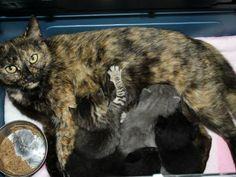 Dolly and kittens -- saved!