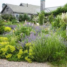 Drought resistant plants | A collection of water-hardy plants, including lavender, catmint, goat's beard, and lady's mantle, all require minimal water to reach maximum growth.
