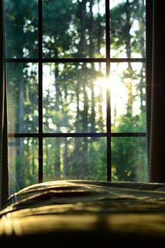 The morning sun coming through the forest around us and peering through our bedroom window
