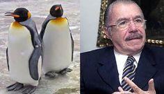Crônicas Americanas: Sarney e os pinguins