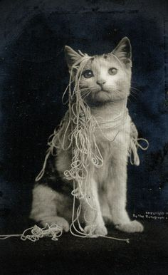 Cat and string.