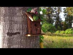 """Unique Geocache - """"Birdhouse"""""""