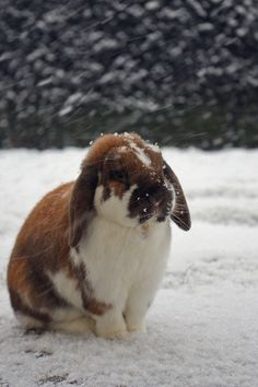 *Where is this bunny?He can be Zed's brother!