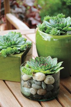 Need a quick centerpiece for a patio table? Just show off in a cluster of tightly packed rosettes of hen and chicks (Sempervivum tectorum) in small pots. The plant in the foreground grows in just enough soil to fill a nursery pot, with small stones Succulents In Containers, Cacti And Succulents, Planting Succulents, Succulent Ideas, Patio Plants, Indoor Plants, House Plants, Plants In Pots, Sempervivum