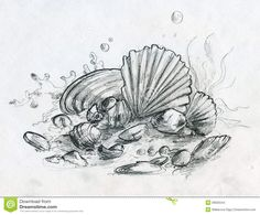 hand-drawn-pencil-sketch-peebles-shells-various-sea-garbage-there-little-stones-corals-even-several-coins-sand-39925544.jpg (1300×1079)