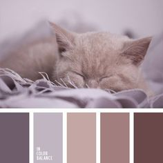 The combination of muted and velvety lilac-brown hues. Soft blankets, sweaters, shawls, wraps and scarves, as well as bath towels and bathrobes in such col. Color Palette For Home, Colour Pallette, Color Combos, Paint Combinations, Design Seeds, Living Room Color Schemes, House Color Schemes, Soft Blankets, My New Room