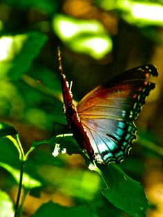 Butterfly at Congaree National Park