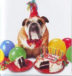 happy 10th birthday to my dog - Google Search