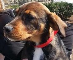 4 / 2    ***BABY ALERT*** Petango.com – Meet Papertowel, a 2 months 21 days Hound / Mix available for adoption in CHICAGO, IL Contact Information Address  169 W Grand Avenue, CHICAGO, IL, 60654  Phone  (312) 644-8338  Email  info@anticruelty.org