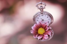 "/ Photo ""Someone like you ."" by Essa Al Mazroee Clock Wallpaper, Miniature Photography, Project Life Cards, Clock Art, Old Clocks, Islamic Art Calligraphy, Someone Like You, Telling Time, Tiny Flowers"