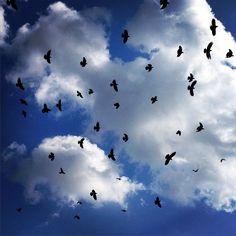 Eliza's K photos | Σαν νοσταλγία .. Επιστρέφουν . #sky #clouds #birds...