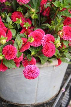 Flower Farm, Flowers, Plants, Plant, Royal Icing Flowers, Flower, Florals, Floral, Planets