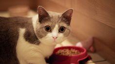 gatos mitos alimentacion