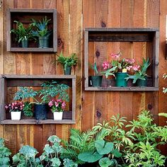 verticle garden in fence