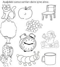 canlı cansız kavramı Preschool Classroom, Kindergarten, Turkish Lessons, School Frame, Book Corners, Frame Crafts, Animal Crafts, Dark Souls, Pre School