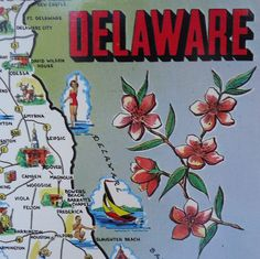 Who knew Delaware's state flower was the peach blossom!