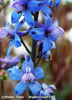 Larkspur ~ These enticing blue growers are definitely just for looking—not eating. Immediately after ingestion, nausea, burning in the mouth, vomiting, and slowing of the heartbeat set in. Seek treatment right away, because six hours is all it takes for this flower to become lethal.