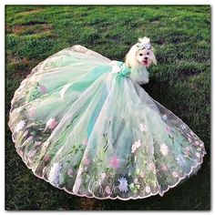 top end wedding dog Dog Wedding Attire, Dog Wedding Dress, Wedding Skirt, Wedding Dresses, Cute Dogs And Puppies, Baby Dogs, Pet Dogs, Perro Shih Tzu, Poodle