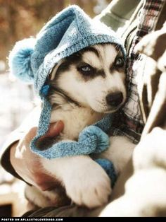 Ready For Winter • dog dogs puppy puppies cute doggy doggies adorable funny fun silly photography