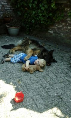 GSD...a boy and his dog