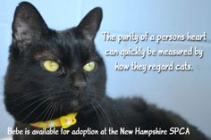 Adopt Bebe today at the New Hampshire SPCA.  #adopt #nhspca