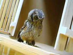 Cute Owl Hunts Invisible Prey - YouTube