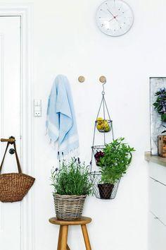 Lav en køkkenhave i køkkenet - Boligliv