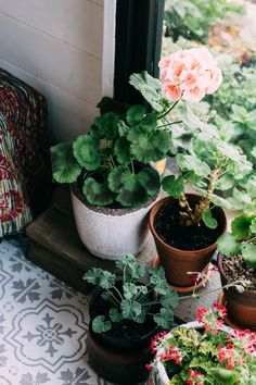Potted Geraniums - About Garden and Flowers Indoor Garden, Indoor Plants, Summer Garden, Home And Garden, Potted Geraniums, Cottage Garden Design, Creation Deco, Rustic Gardens, Container Gardening