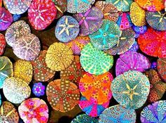 Painted Sand Dollars - a fun summer activity! Perfect for that big bag of sand dollars they brought home from Santa Cruz. Painted Sand Dollars, We Will Rock You, Stone Painting, Rock Painting, Sea Creatures, Belle Photo, My Favorite Color, Rock Art, Painted Rocks