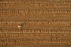 Looking down at a wheat field in Bagan, Myanmar, from a hot air balloon. Photographed by by Sesh Kumar Sareday