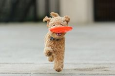 http://imgfave.com/search/dog%20frisbee
