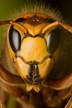The hornet was the school mascot