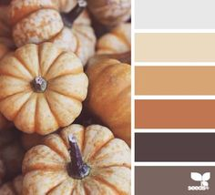 autumn tones | design seeds | Bloglovin