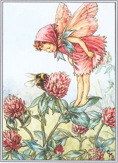 Red Clover Honey: Lower Fairies