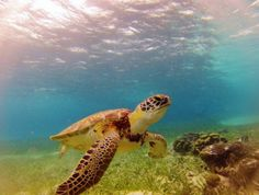Destination: Belize..Scuba & Snorkel Paradise (560 mi Barrier Reef, 2nd largest coral system, 500 species of fish!), Beautiful Beaches, Wildlife Sanctuary, Mayan Sites,Outdoor Adventures & MORE! http://www.unforgettable.cruises/cities/view/Belize/1/120#utm_sguid=172107,cb3a3b31-60b6-15a7-0864-f7e8c2d00b86