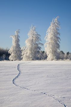 Winter. Snowy landscape with snow covered trees. Footprint.