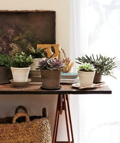 ¿Qué plantas de interior complementan la decoración nórdica? https://decoracionsueca.com/plantas-de-interior-en-decoracion/11757 #plantas #decoración #nórdico