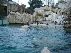 Top 3 zoos in Europe Mount Rushmore, This Is Us, Beautiful Places, Europe, Zoos, Mountains, Park, World, Travel