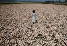 A woman standing in a field of flowers. Photograph by George Strock, 1940s.
