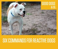 Want to train your dog to respond to you in potentially stressful or reactive situations? Here are six commands to help you.