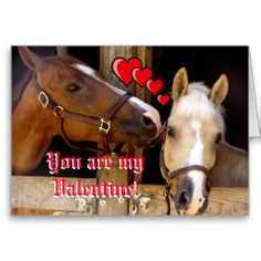 happy valentine horse south africa