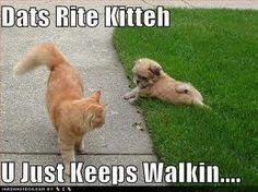 That dog is very territorial!!