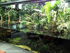 Aquário plantado para jumbos
