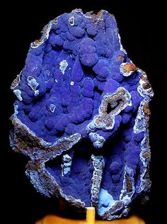 Breathtaking specimen of velvety Azurite on matrix from Bisbee, Arizona!! Classic specimen measuring 16 cm by 11 cm in size. I love Bisbee specimens and this would rate as one of the best 5 specimens I have seen of this variety. Very aesthetic! From the A. Cooper collection. Photography by Kevin Ward