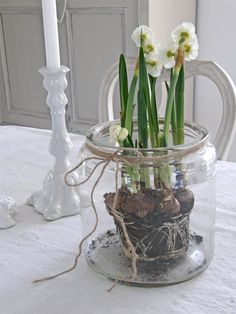 ♥ for my love of paperwhites Jam Jar Flowers, Bulb Flowers, Spring Lambs, Cute Easter Bunny, Wedding Decorations, Table Decorations, Deco Floral, Spring Has Sprung, Winter Christmas