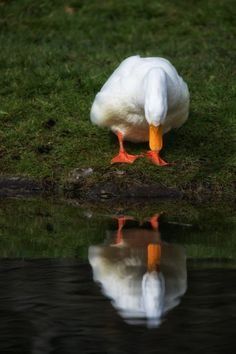 """""""Hey, you're a good looking duck."""""""