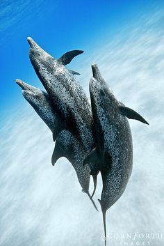 Dolphins moving underwater
