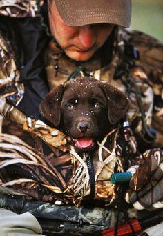 Hunting puppy