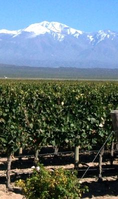 An authentic Mendoza gourmet and wine tour